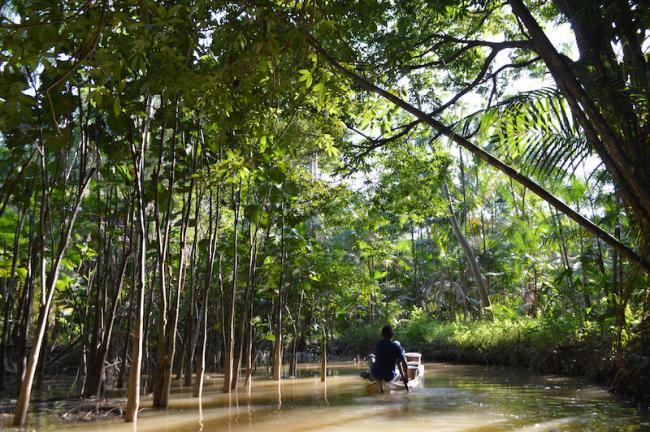 Apanhador de açaí leva a sua colheita por igarapé em Abaetetuba, Pará. (Matthew Abel)
