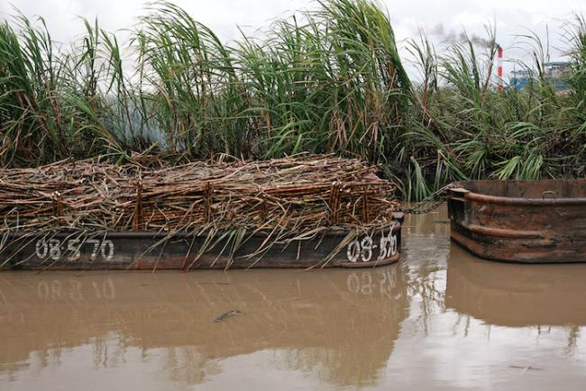 Sugar cane seen loaded on a punt in Skeldon, Guyana. (Kennardp / Flickr / CC BY-NC 2.0)