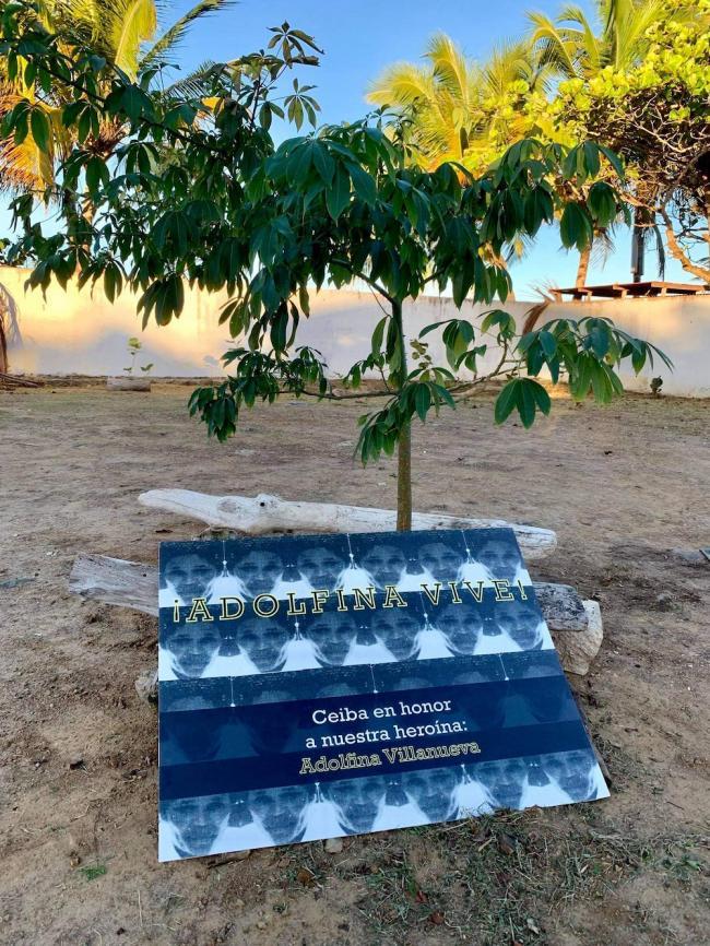 El 10 de diciembre 2020, unxs vecinxs del sector Tocones de Loíza sembraron una ceiba en memorai de Adolfina Villanueva Osorio en el lote donde fue asesinada. (Maricruz Rivera Clemente)