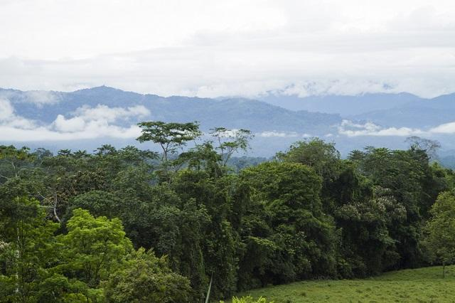 The Talamanca mountain range is the highest elevation in the south of Central America. It extends from the southern part of the Central Valley of Costa Rica and continues through the territory of Panama. (Photo: Santiago Navarro F.)