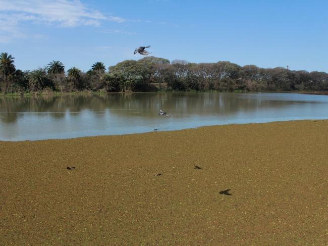 El Río Paraná desde la costa de Buenos Aires (Virginia Tognola).