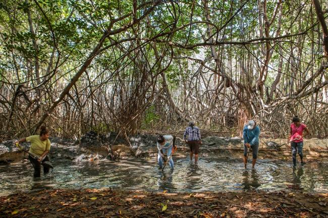 The mangroves of the coastal lagoon complex of Chacahua, Oaxaca are crucial to tackling climate change, as they dampen hurricane and tsunami impact, and prevent coastal erosion. (Antonio Cascio)