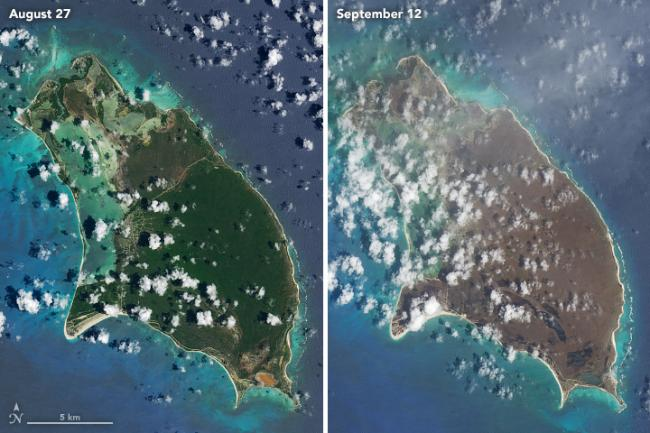 After Hurricane Irma, satellite images indicated a widespread death of vegetation in Barbuda. These natural-color images were captured by the Operational Land Imager (OLI) on the Landsat 8 satellite on August 27 and September 12, 2017 (NASA/Wikimedia Commons).
