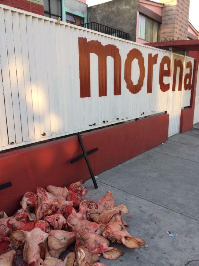 A pile of severed pigs' heads outside the Morena office the day before state elections in the Estado de México (Betos Gy/Twitter)