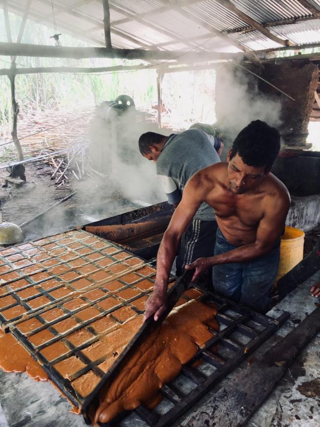 Campesinos en El Orejón producen panela (Foto por Alex Diamond)