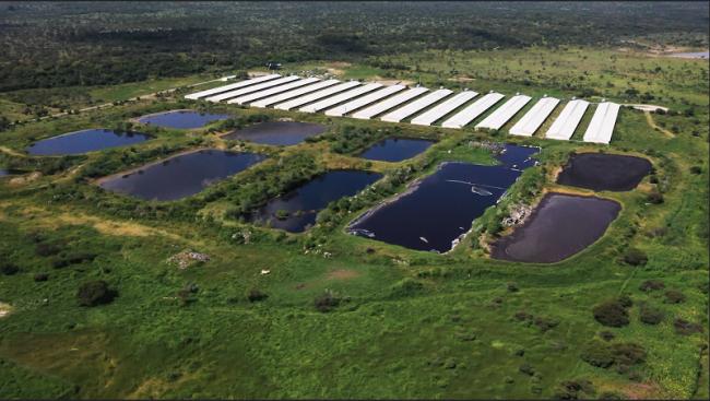 En México, el incremento del consumo de proteína animal y la apertura de nuevos mercados, como el chino, han impulsado la expansión de granjas porcícolas industriales, como ha sucedido en el occidental estado de Jalisco (Foto: Igualdad Animal).