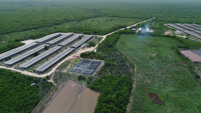 El sudoriental estado de Yucatán se ha convertido en el foco de expansión de la industria porcícola.Una vista aérea de un criadero (Foto: Courtesía de Greenpeace México).