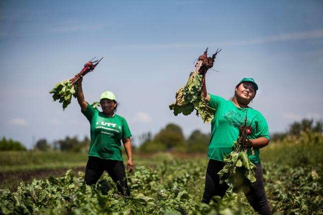 Members of the Land Workers Union (UTT) harvesting beets in Argentina. (Courtesy of UTT)