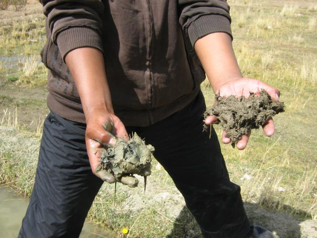 "Two handfuls of soil: On the right, from a field out of reach of mineaffected irrigation water; on the left, from a field covered in ""lamas."" (Heather Williams)"