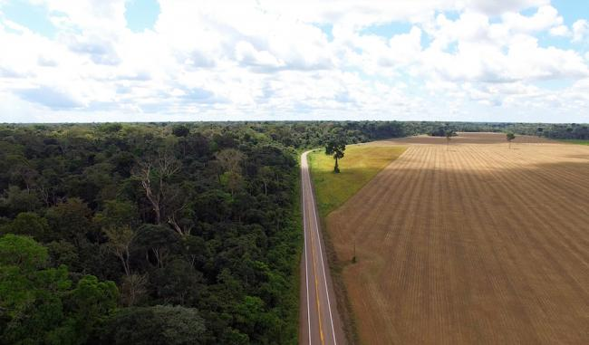 In 2020, Brazil's Amazon suffered the highest deforestation rate in a decade. (Marcos Colón)