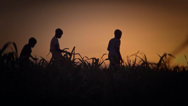 Young boys run through a Dominican sugar cane field. (Stateless)