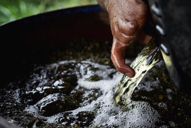 Jairo processes coca leaves into coca paste, near his mother's house in Briceño in February 2017. (Photo by Gerald Bermúdez)