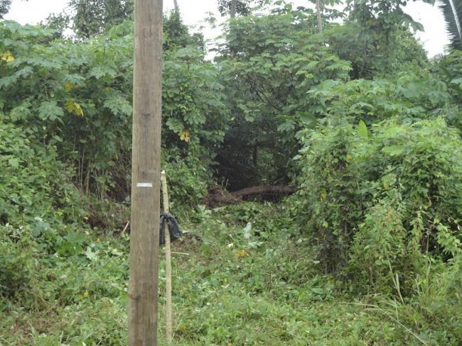 A survey line cut through a forest near the Maya community of Golden Stream. (Julian Cho Society)