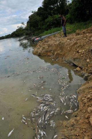 Second major spill that occurred in the Pasion river from REPSA's palm oil production activities, Peten, Guatemala, June 9, 2015. (Photo by CDVN)